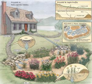 build-a-rain-garden-01-ss