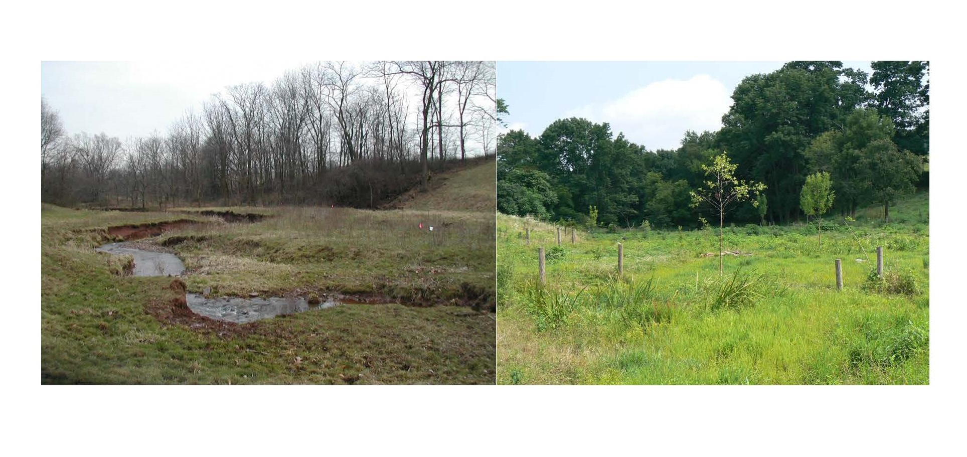 Streamside Buffer: Before and After